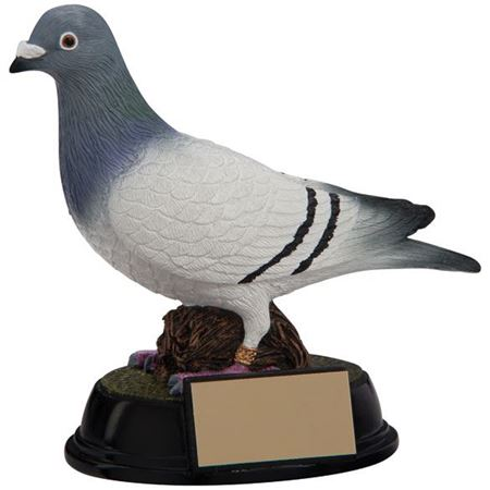 Picture for category Pigeon Awards